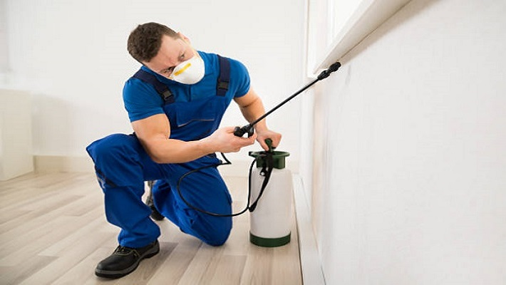 Male worker spraying pesticide on window corner at home